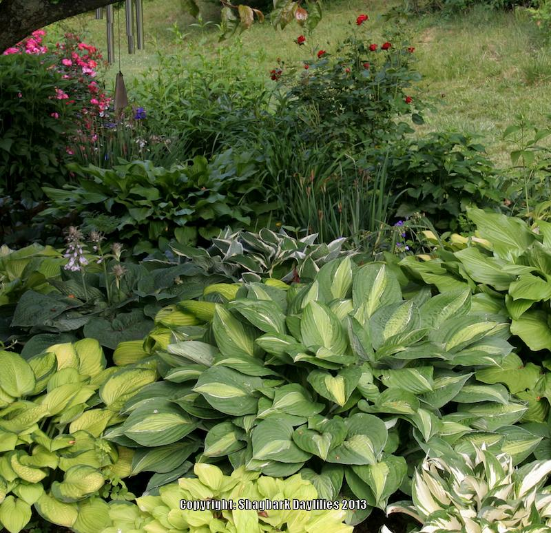 Long living perennials for shade gardenorg for Flowers for shade gardens