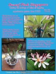 Thumb of 2013-06-17/GigiPlumeria/d57456