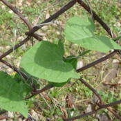 Location: Indiana zone 5Date: 2013-06-13