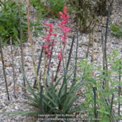 Location: My garden in Hebron, KYDate: 2013-07-03Sticks around the plant to keep the rabbits from chewing on the f