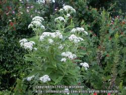 Thumb of 2013-07-07/frostweed/1ac671