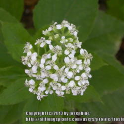 Thumb of 2013-07-07/frostweed/e1b206
