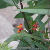 Location: My garden in Northern KYDate: 2013-07-03