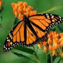Establishing a Monarch Waystation