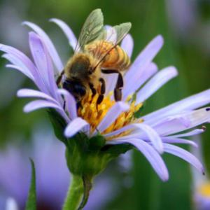 #Pollination  #Bee