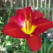 Location: My garden in Southeast VirginiaDate: 2013-07-20