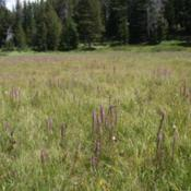 Location: Beartooth Range in WyomingDate: 2013-07-25