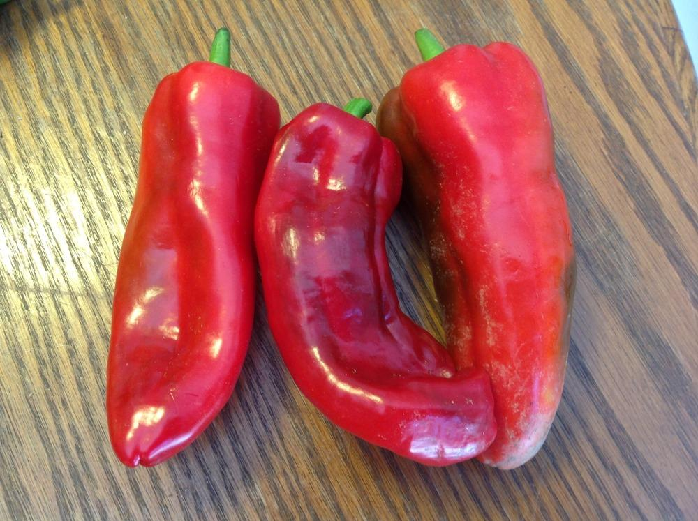Photo of Pepper (Capsicum annuum 'Marconi Red') uploaded by abhege