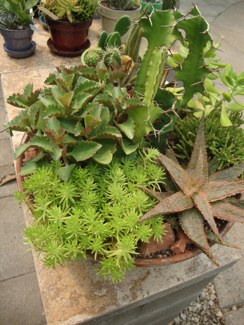 Cactus And Succulents Forum Cacti And Succulent Containers