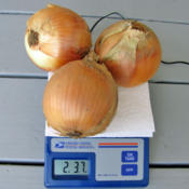 Location: My PlaceDate: August 23, 2013Three Onions: Two Pounds & 3.7 Ounces