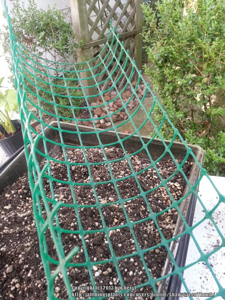 All Things Gardening Forum Need Climbing Stake For My