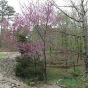 Location: Our Driveway - Hot Springs Village, ARDate: 2013-04-10
