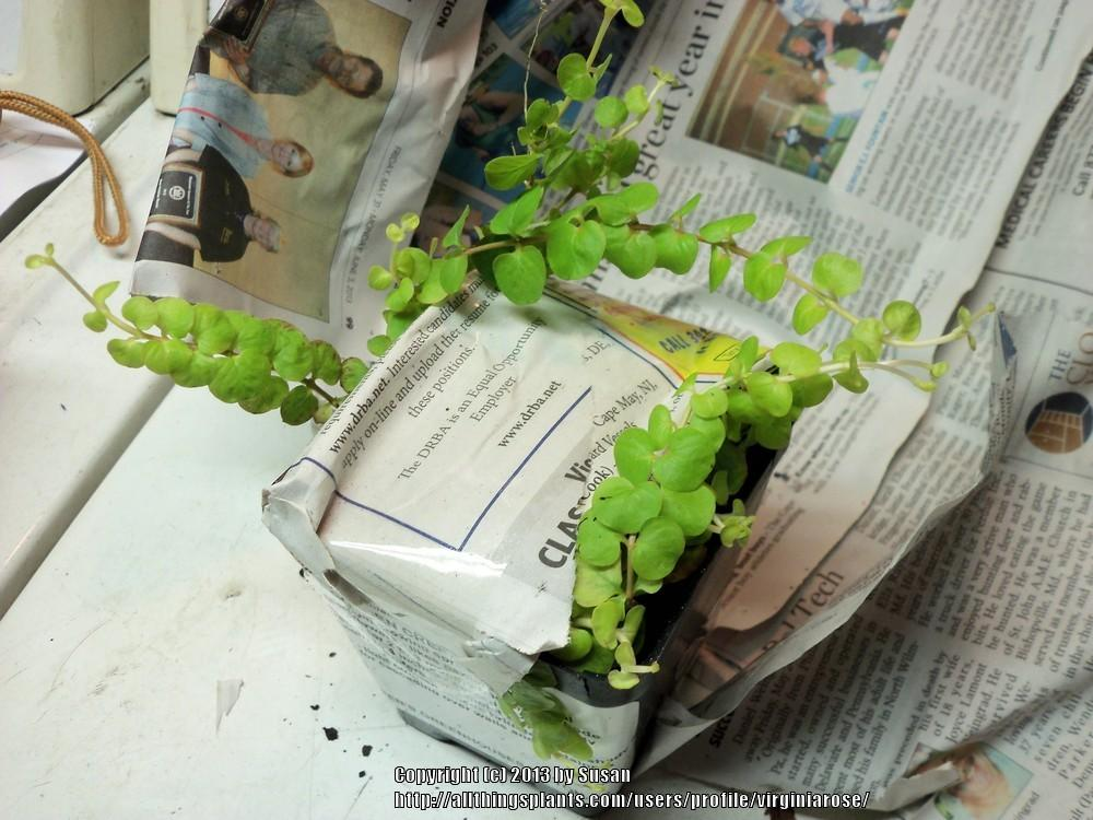 The Green Pages Accents For Home And Garden Pepper S Greenhouse