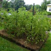 Location: Long Island, NY Date: 2013-08-13square raised tomato bed