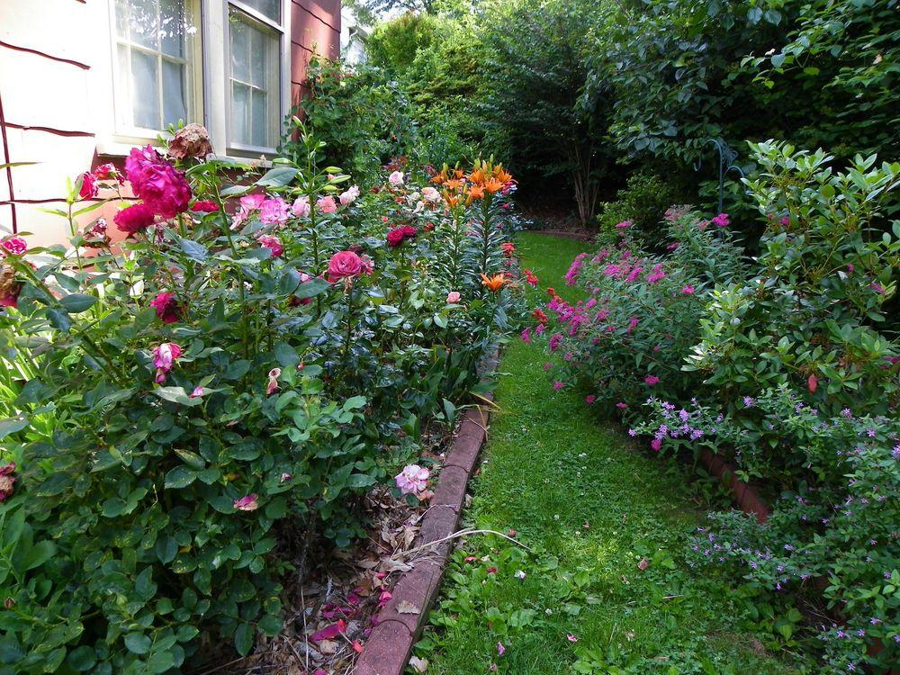 Roses And Lilies Belong Together Garden Org