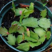 Date: 2013-06-06Newly propagated cuttings.