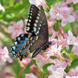 #Butterflies & #Hummingbirds Love This Plant #Pollination