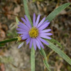 Thumb of 2013-10-10/wildflowers/0b1a60