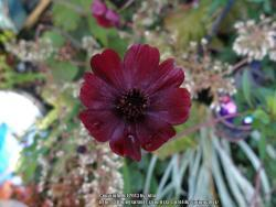 Thumb of 2013-10-11/springcolor/26cf6c
