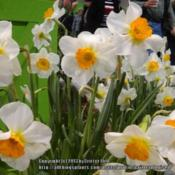 Location: 2012 Philadelphia Flower ShowDate: 2012-03-06