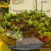 Location: 2012 Philadelphia Flower ShowDate: 2012-03-06terrarium colony