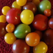 Date: 2013-10-24Small heirloom tomatoes