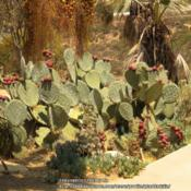 Location: San Diego, CaDate: 2013-08-16 Photo taken mid August, Balboa Park, San Diego, Ca