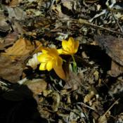 Location: Long Island, NY Date: 2013-03-27