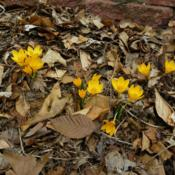 Location: Long Island, NY Date: 2013-03-31
