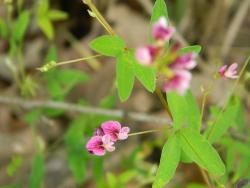 Thumb of 2013-11-04/wildflowers/428d9e