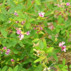 Thumb of 2013-11-04/wildflowers/96c026