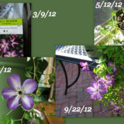 Date: VariousCollage showing the plants from Walmart, planted and pl