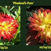 Location: The ParkDate: 2013 FallShows the change in coloring over just one month.