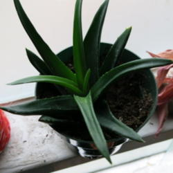 Thumb of 2013-12-09/AR/5b7531