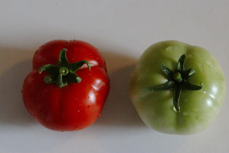 Photo of Tomato (Solanum lycopersicum 'Early Girl') uploaded by robertduval14