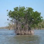 Location: Cape Sable area of Everglades National ParkDate: Febuarycredit: Andrew Tappert