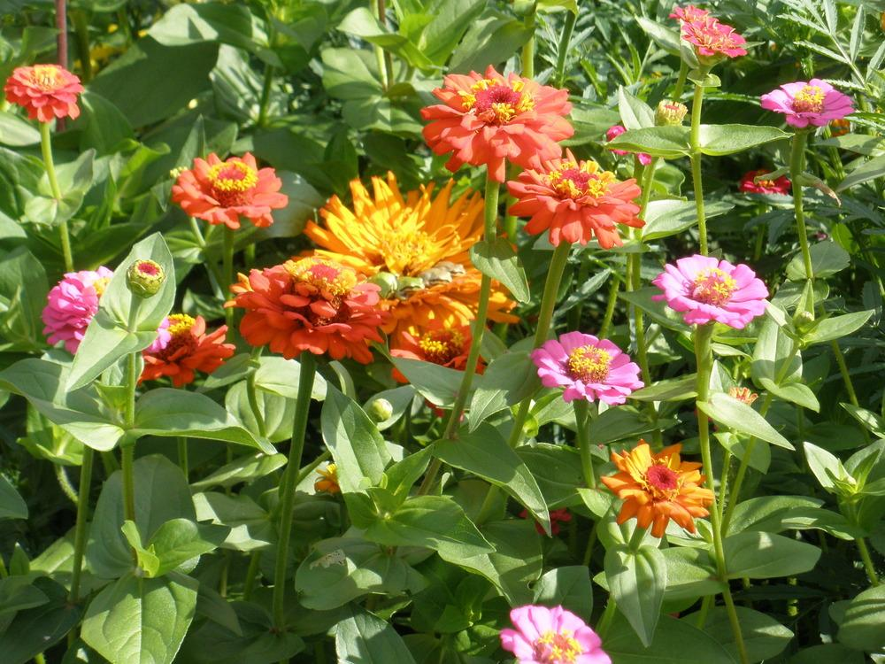 Easy Annual Flowers Bloom All Summer Gardenorg