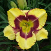 Location: Dreamy Daylilies - Chatham-Kent, Ontario   5bDate: 2013-07-02