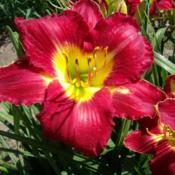 Location: Dreamy Daylilies - Chatham-Kent, Ontario   5b