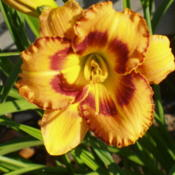 Location: Dreamy Daylilies - Chatham-Kent, Ontario   5bDate: 2005-07-10