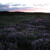 Location: At Herdubreidarlindir, North Iceland.Date: July 25th 2011 at midnight.In the midnight dusk late in July