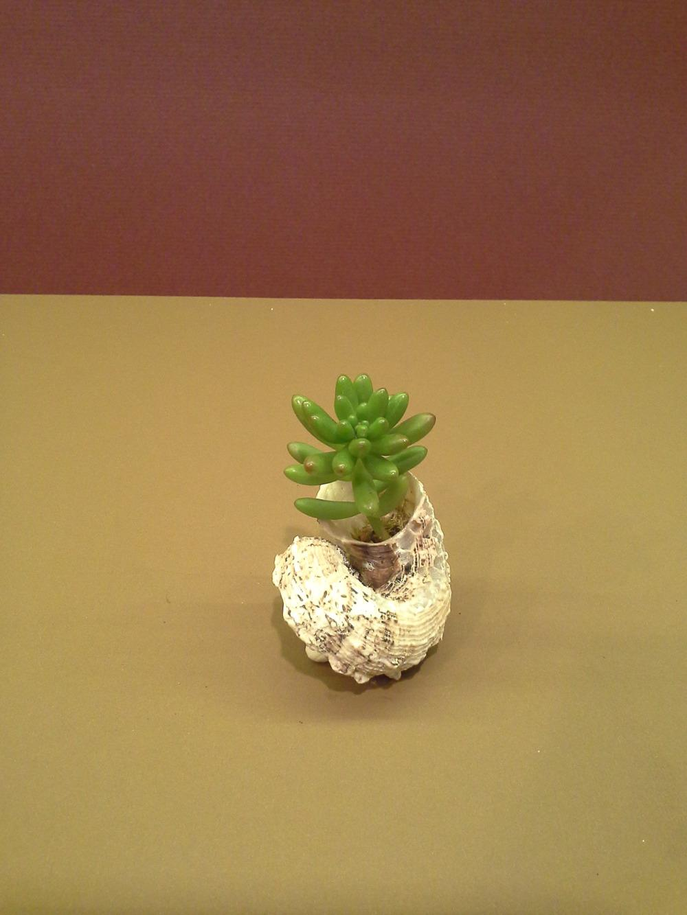 Containers Forum My Succulent Dish Gardens Garden Org