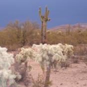 Location: Superstition Mtns, ArizonaDate: July 2007foreground