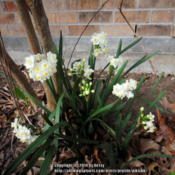 Location: my garden, front bedDate: 2014-02-19