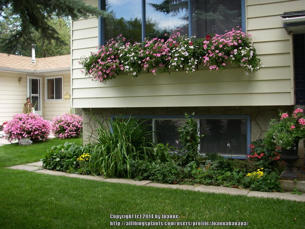 Incroyable Combine Flowering Plants And Those With Attractive Foliage In Window Boxes  To Add Color To Decks, Window Sashes, And Porch Rails.