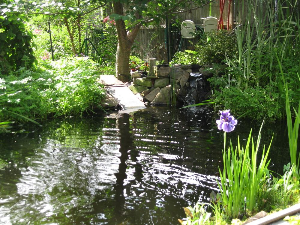 Building a pond great article for Building a pond