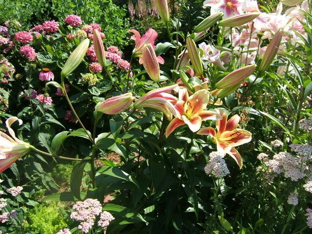 Ask a Question forum: Anybody have an opinion on Breck\'s bulbs ...