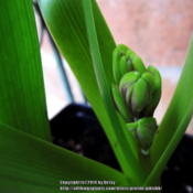 Location: my garden Date: 2014-03-08