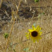 Location: Upper Las Virgenes Open Space Preserve, CaliforniaDate: 2008-08-14