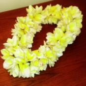 Location: Southwest FloridaDate: March 2014a lei made out of Celadine blooms; this is the preferred lei-flow